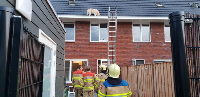 Brandweer redt hond uit de dakgoot