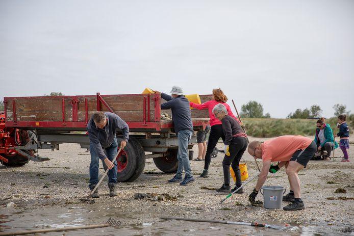 Het strandje van Ouwerkerk wordt ontdaan van oesters en stenen door verschillende vrijwilligers. Vlnr: Jakkoo Brouwer, Maarten Hefti, Mieke Verhagen, Monique Hefti, Roy Klop en op de achtergrond Liëtte Wijnen met dochter Zara.