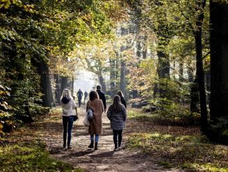 Op wandel in de regio Mechelen: de acht mooiste wandelingen in de buurt