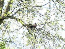 Kat na twee dagen uit veel te hoge boom gehaald