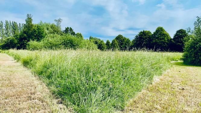 Gemeentebestuur biedt voedergras van abdijpark aan