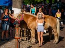 Extra hulpverleners en schaduw houden pony's op de Paardenmarkt rustig