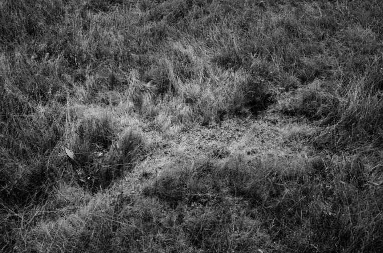 'Een veldengel', een maand na de ramp met vlucht MH17 gefotografeerd in Oekraïne. Beeld Maria Tuchenkova