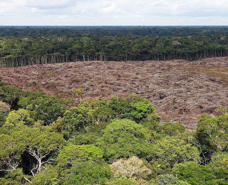 Een stuk van het regenwoud dat is gekapt in het Amazonegebied. Beeld EPA