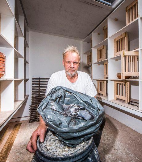 50 jongen duifjes gedood: een diep droevige climax van bureaucratische kwestie in Almelo