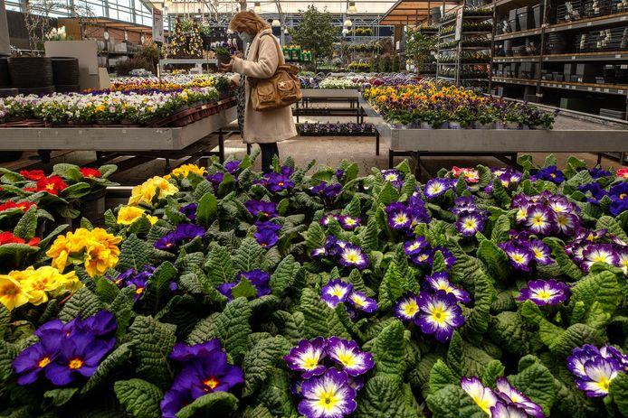Klanten hebben bij Intratuin in Nuenen volop ruimte om te winkelen, maar wel alleen op afspraak.