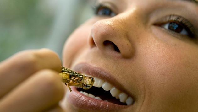 Een vrouw eet een gefrituurde sprinkhaan in het bedrijfsrestaurant van het ministerie van Landbouw, Natuur en Voedselkwaliteit in Den Haag. Het eten van sprinkhanen past in Nederland in het beleid van het ministerie voor duurzaam voedsel. Archieffoto © anp