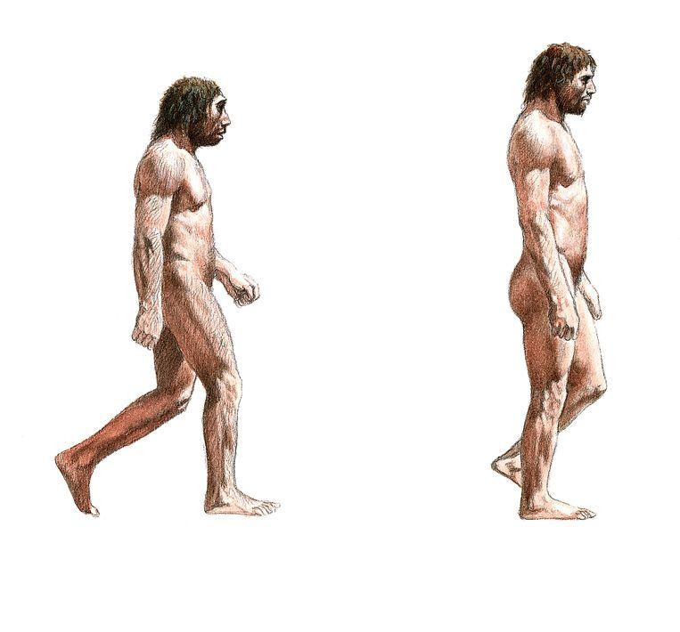 De neanderthaler (links) en de homo sapiens. Beeld BELGAIMAGE