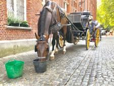 Het is nu officieel: koetsiers in Brugge mogen bij temperaturen boven 30 graden niet meer uitrijden