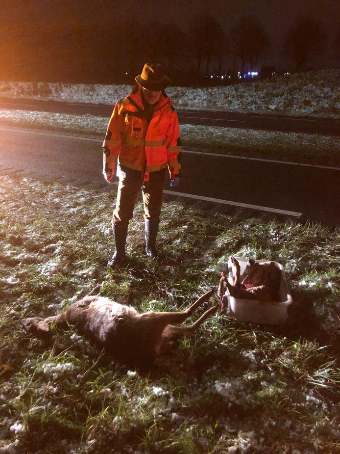 Een wildbeheerder moest gisteravond de restanten van de reeën van de weg af halen.
