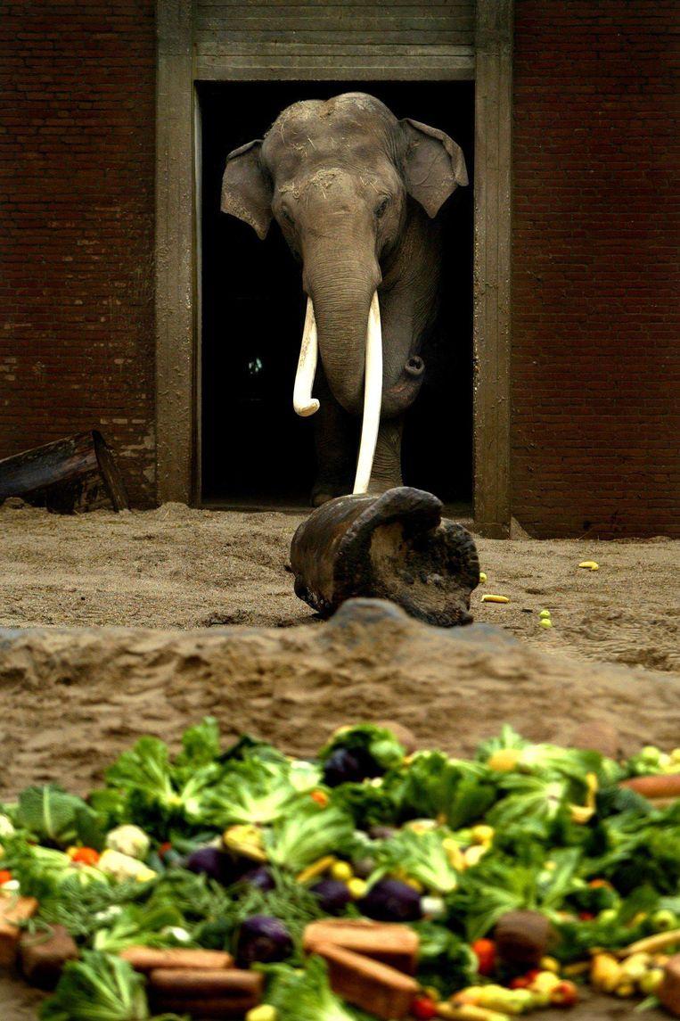 Mannetjesolifant Murugan in januari 2003. Beeld Olaf Kraak/ANP