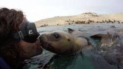 """Schattig! """"Verliefde"""" zeehond geeft duiker twee kussen"""
