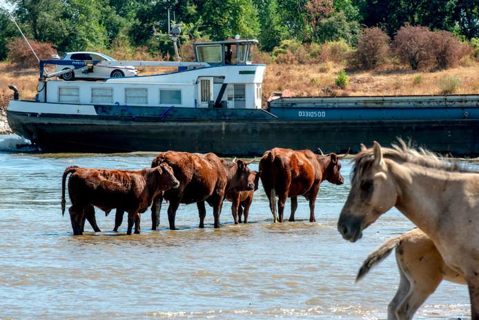 De Rode Geuzen en Koninkpaarden staan en liggen bijna in het vaarwater.