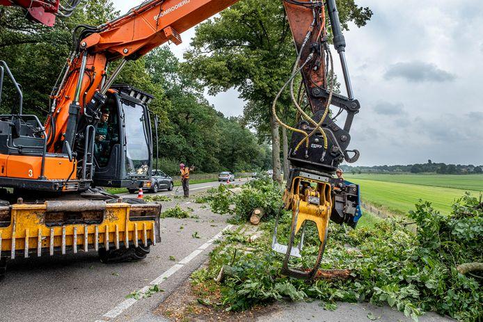 Op de N271tussen Mook en Milsbeek werden deze week meerdere bomen gerooid. Uiteindelijk moeten 74 exemplaren wijken voor de reconstructie van de weg.