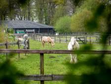 Vrouw die trap kreeg bij paardenpark Empe had eerst hersenbloeding: 'Paarden zagen haar waarschijnlijk als zwakste schakel'