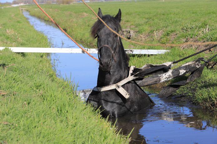 Paard vast in sloot Schipluiden.