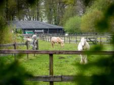 Vrouw die trap kreeg bij paardenpark had eerst hersenbloeding: 'Ze zagen haar als zwakste schakel'