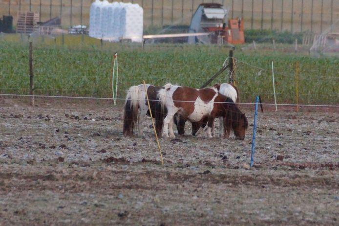 De politie doet onderzoek naar een aantal verwaarloosde paarden. Agenten, waaronder de dierenpolitie, gingen naar de locatie in Haarsteeg.