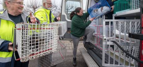 Dierenbescherming haalt 22 verwaarloosde katten uit huis in Rhenoy