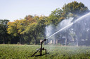 Een bomenrij in het landbouwgebied nabij het Achterhoekse Halle begint in de zomer van 2019 al de herfstkleuren te krijgen vanwege de droogte. Twente en de Achterhoek zijn de droogste gebieden van Nederland met een zeer lage grondwaterstand.