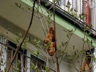 Gevaarlijk mysterieus beest in boom blijkt croissant te zijn