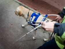 Une ASBL liégeoise a créé des tutos pour former les chiens guides malgré le confinement
