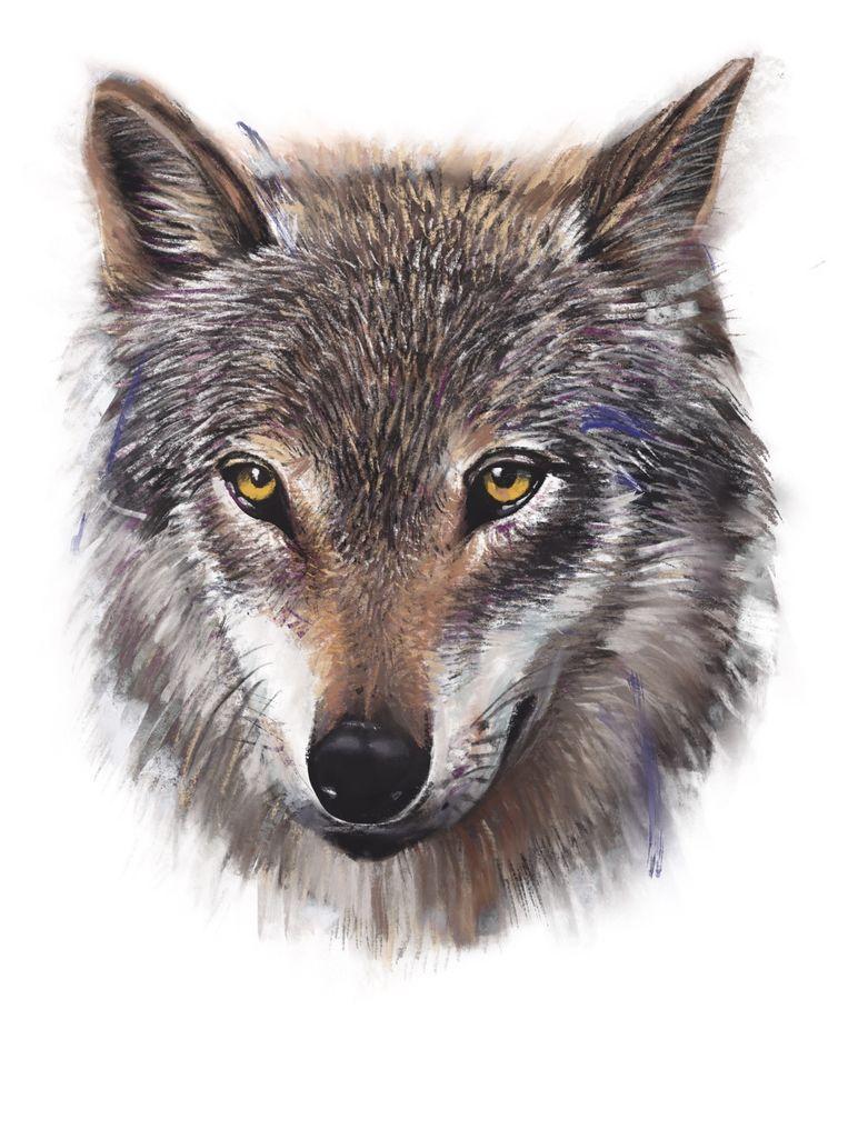 Wolf Naya. Beeld Studio Caro