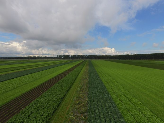ERF bv onderzoekt de voor- en nadelen van akkerbouw in stroken, op een perceel aan de Ibisweg in Zeewolde. Dit is de enige Lighthouse Farm in Nederland.