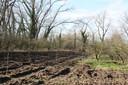 Een deel van de 1600 bomen is al geplant.