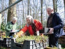 Tuinen van Mien Ruys bij Dedemsvaart begint verkoop, maar écht open zijn ze nog niet: 'Het zou te druk worden'