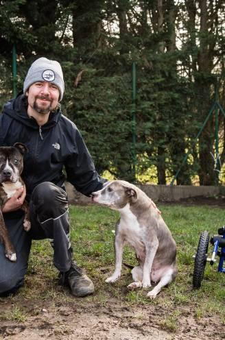 """Elke dag worden 2 honden in beslag genomen. """"Ze zijn blind, verlamd of graatmager. Hoe krijgen mensen dat toch over hun hart?"""""""