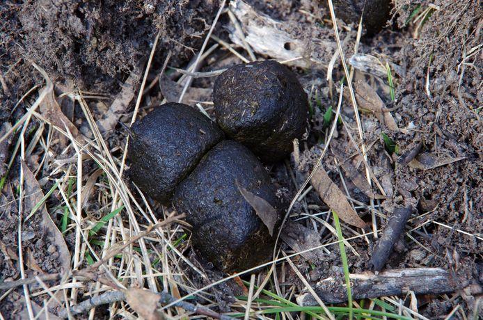 De uitwerpselen van een wombat zijn kubusachtig van vorm.