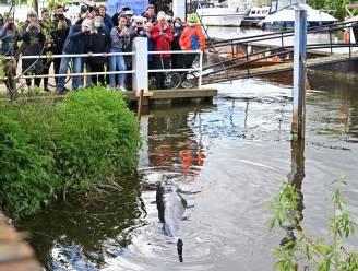 Bevrijde walvis in Londen strandt helaas opnieuw en wordt geëuthanaseerd