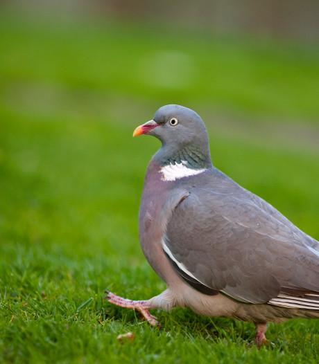Deze vijf diersoorten moeten vanaf vandaag weer vrezen voor hun leven