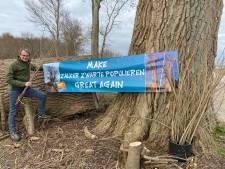 Jaar na omhakken monumentale bomen in Zalk waagt liefhebber Wim nieuwe poging om zwarte populieren te 'redden'