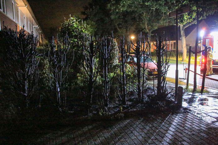 Een coniferenhaag vloog vannacht in brand aan de Brouwhuissedijk in Helmond. De politie gaat uit van brandstichting.