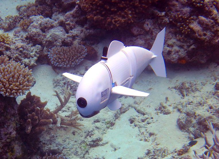 SoFi, de robotvis van het Massachusetts Institute of Technology, duikt tot 18 meter diep.  Beeld rv