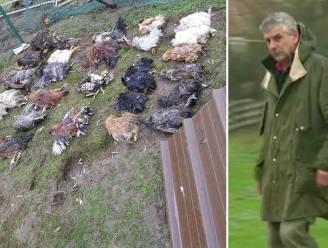 Rottweilers bijten bijna honderd dieren dood in dorpje op taalgrens