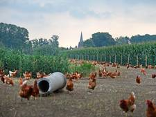 Twente en Achterhoek vooralsnog niet zwaar getroffen door eierschandaal
