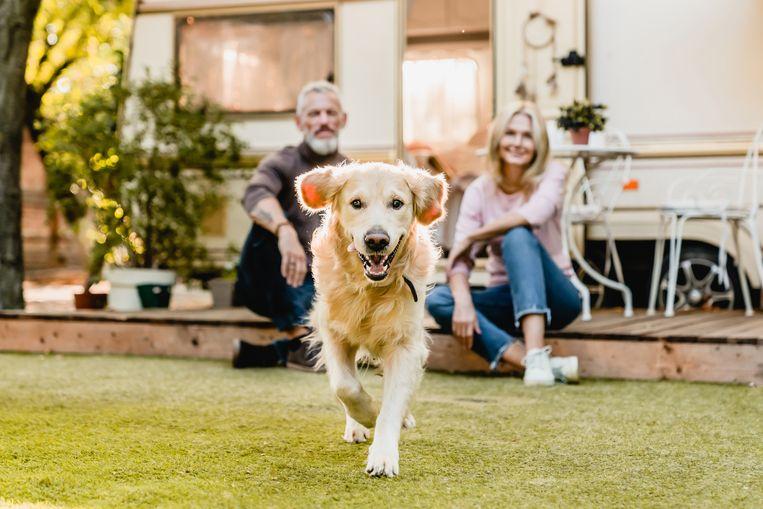 Onderzoek wijst uit: stellen met een hond hebben een betere relatie Beeld Getty Images/iStockphoto