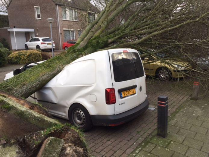 Boom op auto in Bolderiklaan in Waalre.
