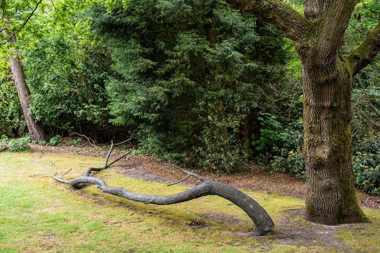 Joop van Caldenborgh liep anderhalf uur met de Italiaanse kunstenaar Giuseppe Penone door zijn tuin, op zoek naar een geschikte plek voor deze bronzen boomstronk, Biforcazione (1991). Intussen hadden de transporteurs het op deze plek neergelegd. Mooier werd het niet.  Op de plek van een twijg heeft Penone een handafdruk in het brons gezet, waar water uitstroomt. Het symboliseert de hereniging van mens en natuur. Beeld Simon Lenskens