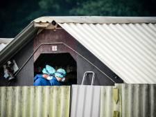 NVWA heeft meer dan 570.000 nertsen geruimd wegens coronavirus