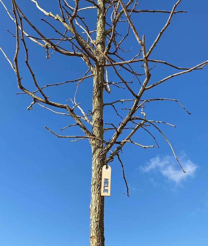 De boom krijgt het label 'Nele', ter herdenking van de overleden mama in november.