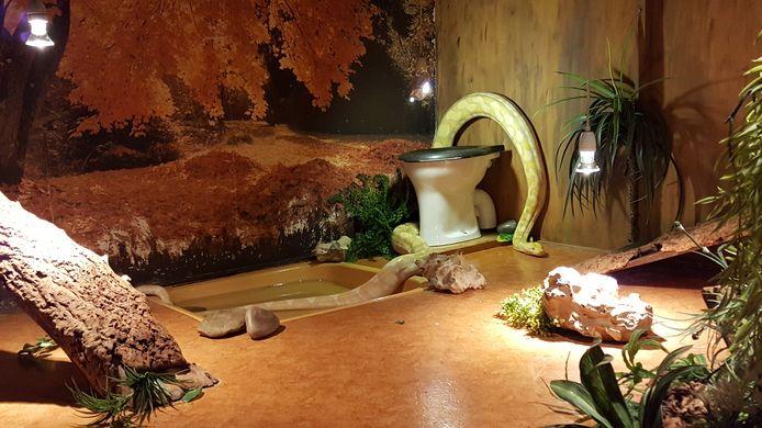 De verzorgers van Iguana hebben voor de grap een toiletpot in het verblijf geplaatst van de python. Een knipoog naar zijn verleden.