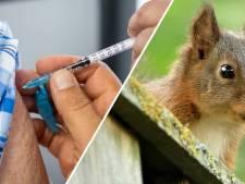 Gemist? Vaccinatiegraad laagst in Enschede & steeds meer eekhoorns in Twente