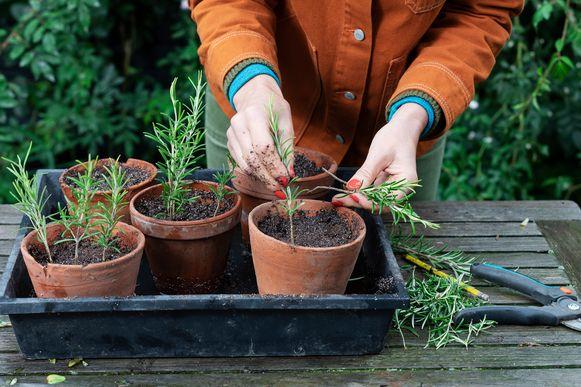 Ideaal om nu al je kruiden te planten. Laat ze in een pot staan, uit de wind en in de zon, en plant ze in de lente in je tuin.