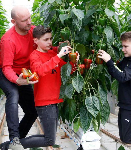 Niet één, niet twee, maar drie generaties plukken paprika's in Est