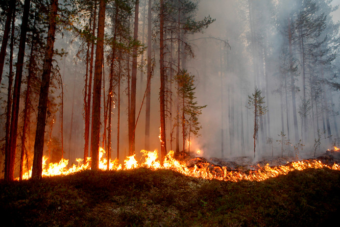 De bosbrand bij Karbole.