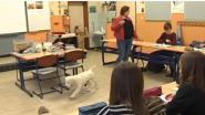 Klashond Pino maakt leerlingen aandachtiger en rustiger